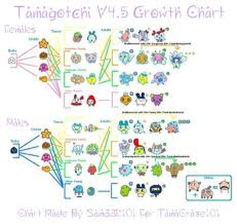 Tamagotchi V4 Growth Chart Ibovnathandedecker